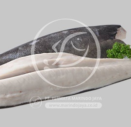 Oilfish HGT