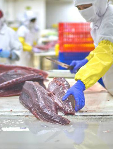 company fisheries and marine fish processing